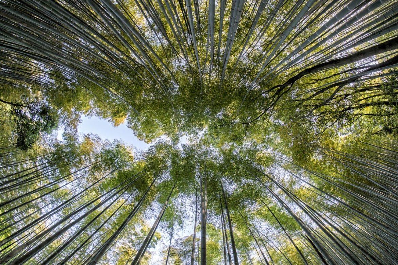 Forêt par Thanapat Pirmphol de Pixabay